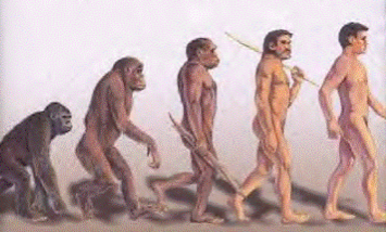CMO evolution