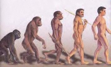 CMO evolution